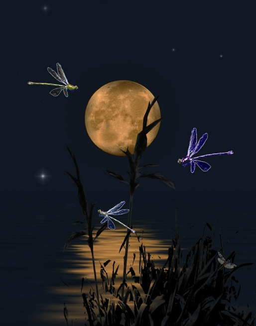 dragonflies-407713_1280 (2)