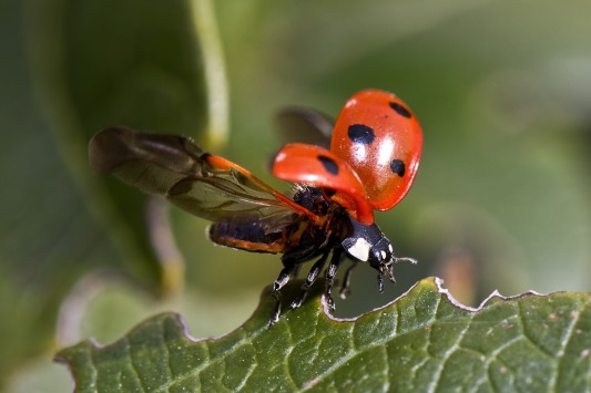 ladybug-743562_1920 (2)