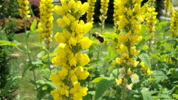 yellow-678408_1920 (2)