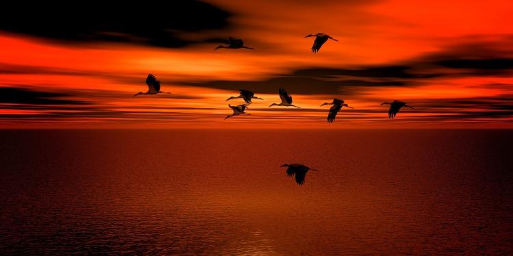 sunset-2576022_1920 (2)