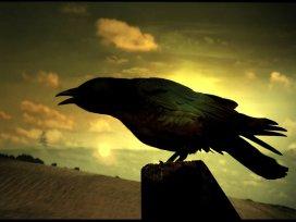 raven-73179_1280 (2)janxi darkbird