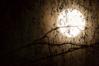 moon-2933976_1920 (2)Lukas Bieri