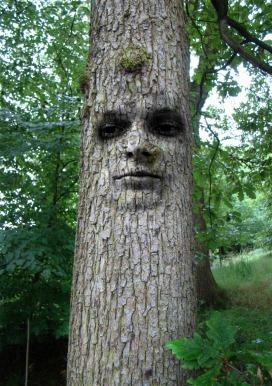 tree-1519868_1920 (2)Tim Striker